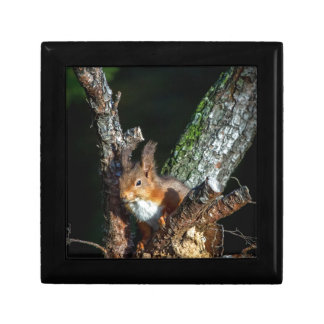 Red Squirrel Up A Tree Gift Box