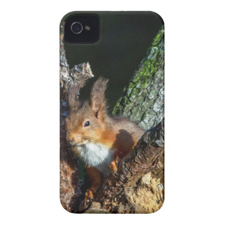 Red Squirrel Up A Tree iPhone 4 Case-Mate Case