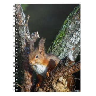 Red Squirrel Up A Tree Notebook