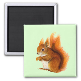 Red Squirrel Watercolor Painting Wildlife Artwork Square Magnet