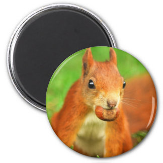 Red Squirrel with a nut 6 Cm Round Magnet
