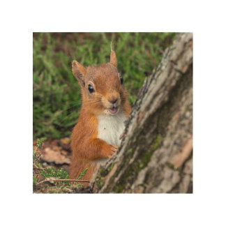 red squirrel wood canvas