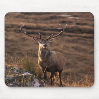 Red Stag Mousepad