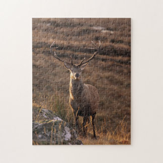 Red Stag Puzzle/Jigsaw Jigsaw Puzzle