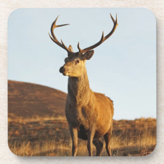 Red Stag Set of 6 Coasters
