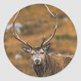 Red Stag Stickers