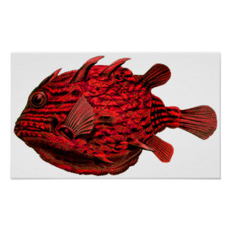 Red Striped Cowfish Poster