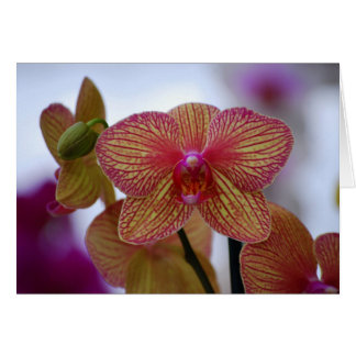 Red-Striped Phalaenopsis Orchid Card
