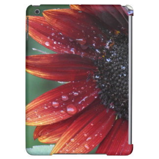 Red Sunflower Petals And Rain Drops
