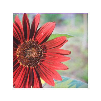 Red Sunflower Print Stretched Canvas Prints