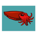 Red Swimming Cuttlefish Postcards