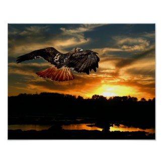Red tail hawk at sunset poster