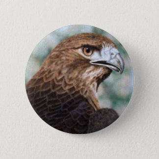 Red-tail Hawk Button