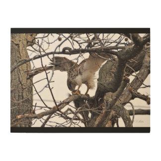 Red-tail Hawk on Wood Wood Print