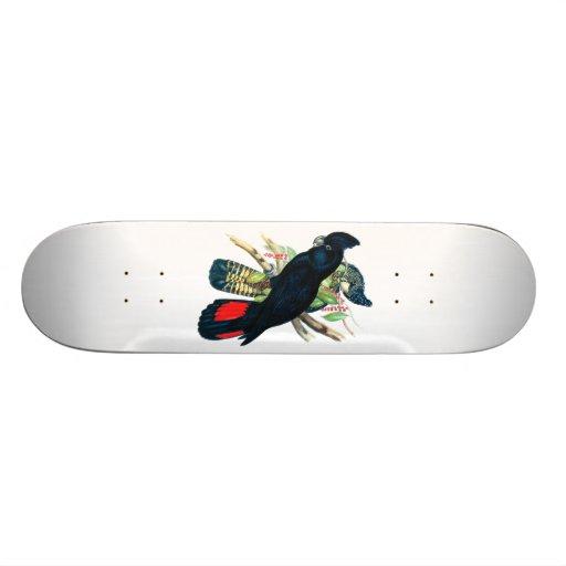 Red tailed, Black (Banksian) Cockatoos. Skate Board