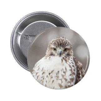 Red Tailed Hawk 6 Cm Round Badge