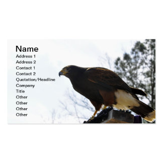 Red Tailed Hawk Against a Blue Sky Business Sky Pack Of Standard Business Cards