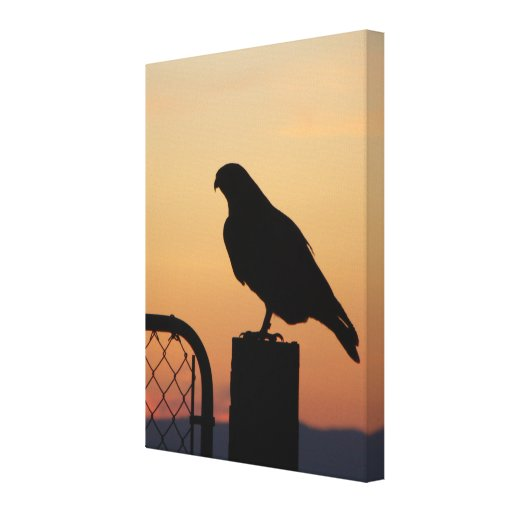 Red-tailed Hawk at Sunset Gallery Wrap Canvas
