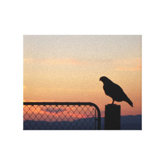 Red-tailed Hawk at Sunset Stretched Canvas Prints