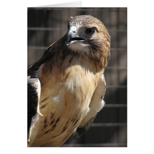 Red-tailed Hawk/Buzzard Card