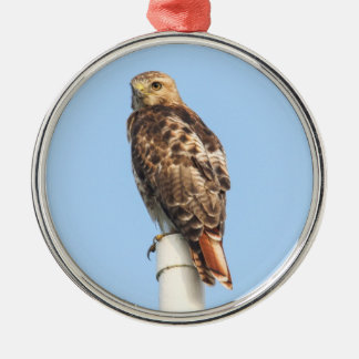 Red-tailed Hawk Christmas Ornament