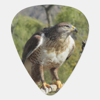 Red Tailed Hawk Guitar Pick