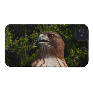 Red-tailed Hawk iPhone 4 case