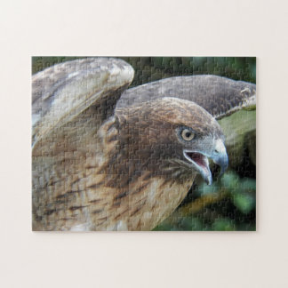 Red-tailed Hawk Photo Jigsaw Puzzle