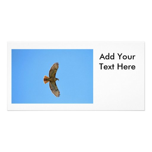 Red-Tailed Hawk Photo Photo Card Template