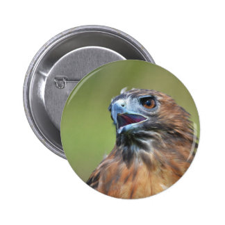 Red tailed hawk pin