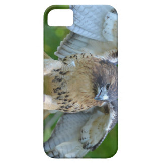 Red-tailed Hawk Spread Wings iPhone 5 Case