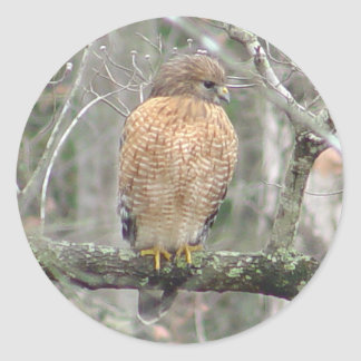 Red Tailed Hawk Stickers