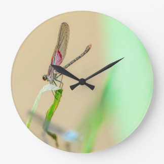 Red Texas Damselfly Resting Large Clock