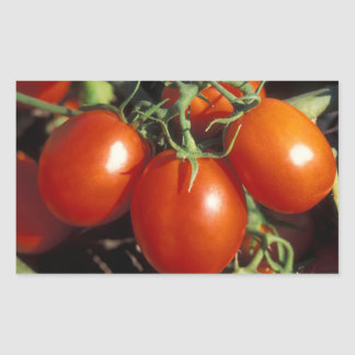 Red Tomatoes Rectangular Sticker