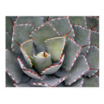 Red-toothed agave