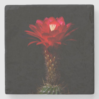Red torch cactus flower stone coaster