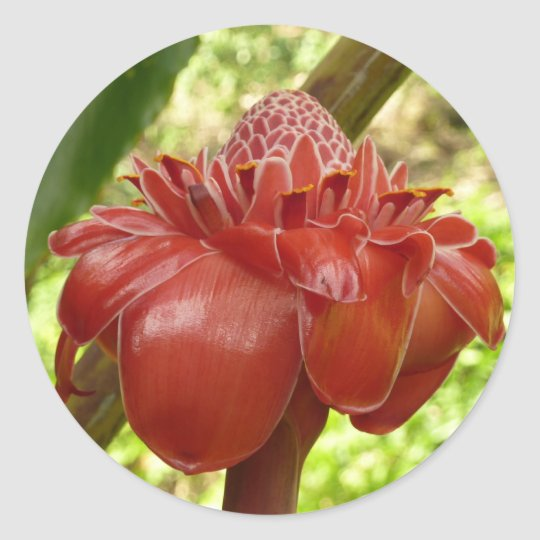 Red Torch Ginger Tropical Flower Photography Classic Round