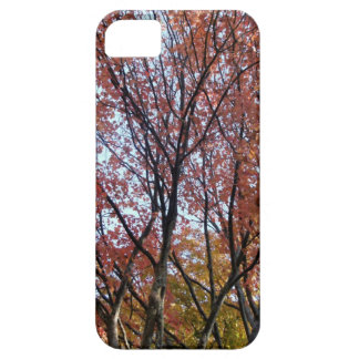Red Tree iPhone 5 Cases