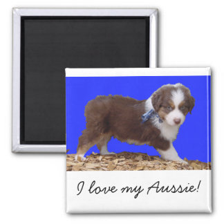 Red Tri Aussie Puppy Square Magnet
