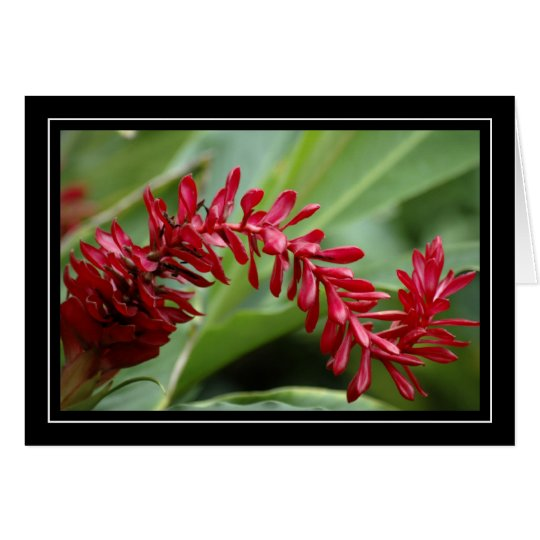 Red Tropical Plant Blank Card