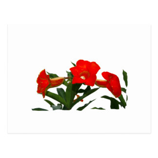 Red Trumpet Flowers cutout photo floral design Post Card