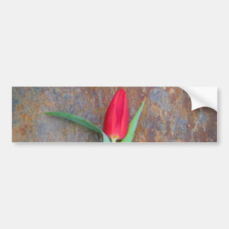 Red Tulip Brown Stone Wall Bumper Stickers