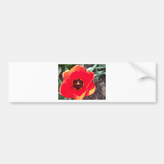 Red tulip bumper stickers