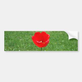 Red Tulip Bumper Sticker