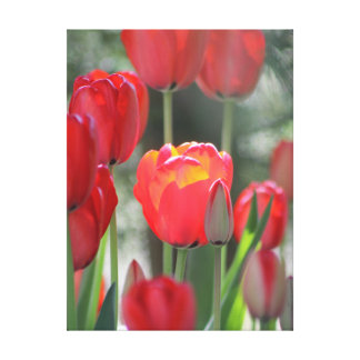 "Red Tulip Canvas 24"" x 32"" Canvas Print"