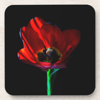 Red Tulip Drink Coasters
