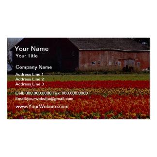 Red Tulip farm, Mt. Vernon, Washington flowers Business Cards