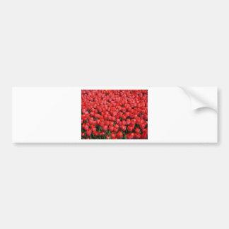red tulip field bumper sticker