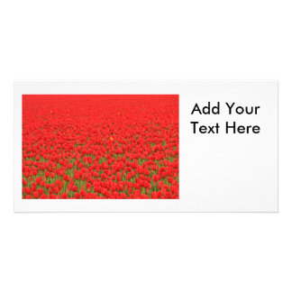 Red Tulip Field Personalized Photo Card