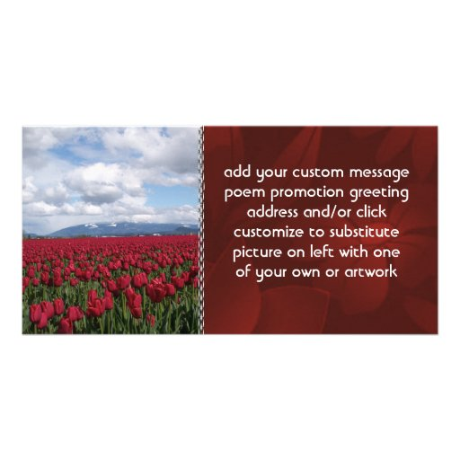 Red Tulip Field Picture Card